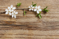 Apple blossom on wooden background Royalty Free Stock Images