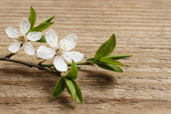 Apple blossom on wooden background stock images