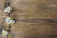 Apple blossom on wooden background stock photos