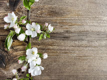 Apple blossom on wooden background royalty free stock photography