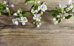 Apple blossom on wooden background royalty free stock photos