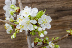 Apple blossom on wooden background royalty free stock image