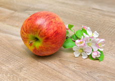Apple and blossoming branch of apple on wooden background Royalty Free Stock Images
