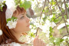In apple blossoms Royalty Free Stock Images