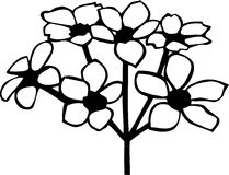Apple Blossoms. Line Art Illustration of Apple Blossoms Stock Image