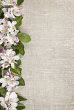 Apple blossoms border Stock Images