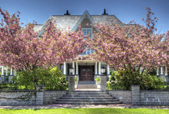 Apple Blossoms and Mansion. A mansion sits behind two apple blossom trees in bloom that stand on either side of the entrance Royalty Free Stock Photo