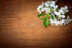 Apple blossoms in spring and empty wooden deck table. Apple blossoms in spring and empty wooden deck Royalty Free Stock Photos