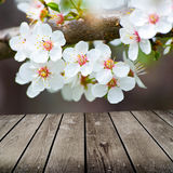 Apple blossoms in spring and empty wooden deck table. Royalty Free Stock Images