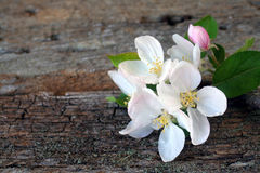 Apple Blossoms on Wood Royalty Free Stock Photos