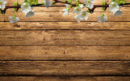 Branch of apple. Apple blossoms on wooden background Stock Images