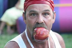 Apple Bobbing Bob. Picture of a guy with an apple in his mouth. Apple Bobbing Bob Royalty Free Stock Photo