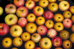 Apple Bobbing Royalty Free Stock Images
