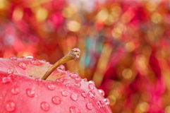 Apple and bokeh Stock Images