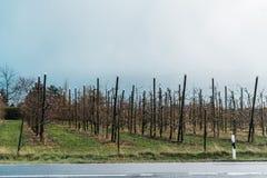 Apple-bomen in een landbouwbedrijftuin stock afbeeldingen