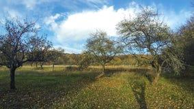 Apple-bomen met gele appelen in de herfstboomgaard stock footage