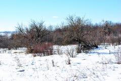 Apple-bomen zonder bladeren op sneeuwweide met struiken, de winterlandschap, blauwe hemel royalty-vrije stock afbeeldingen