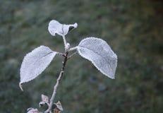Apple-boom in bevroren tuin Stock Afbeelding