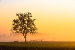 Apple-boom op een mistige ochtend royalty-vrije stock foto's