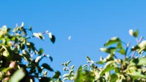 Apple-boom tegen de zon Royalty-vrije Stock Afbeeldingen