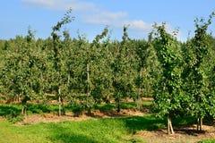Apple-boomgaard Stock Fotografie