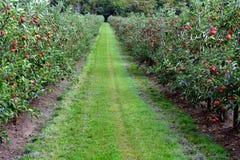 Apple-boomgaard Royalty-vrije Stock Foto