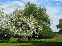 Apple-boomgaard in groen en wit royalty-vrije stock afbeelding