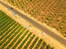 Apple-boomgaarden Royalty-vrije Stock Afbeeldingen