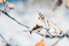 Apple-boomtak met bladeren met rijp op een zonnige de winterdag die worden behandeld royalty-vrije stock fotografie