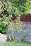 Apple-boomtak over vage steenmuur stock afbeelding