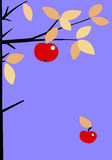 Apple on branch. Of the aple trees royalty free illustration