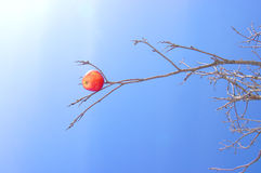 Apple on a branch. The Image of a red apple against the blue sky Stock Photos