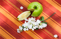 Apple with a branch of a blossoming apple-tree Stock Image