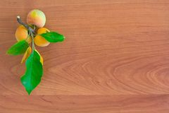Apple branch with ripe apples on a wooden background Royalty Free Stock Images