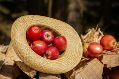 Apple in brown sack hate royalty free stock photo