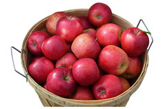Apple bushel Royalty Free Stock Photography