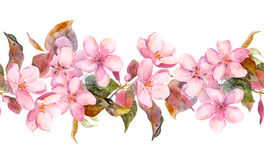 Apple or cherry pink flowers. Seamless floral stripe frame. Watercolor painted fringe Stock Photography
