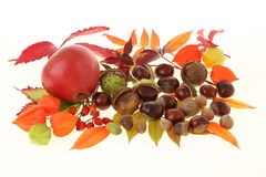 Apple and chestnuts Royalty Free Stock Image