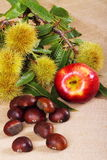 Apple and chestnuts. Background with jute fabric with chestnuts and apple on foreground Stock Photography