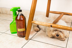 Apple cider vinegar discourage dogs and cats from chewing on fur Royalty Free Stock Images