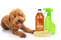 Apple cider vinegar effective as natural flea repellent and all Stock Photos