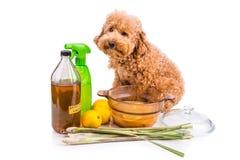 Apple cider vinegar, lemon,  lemongrass effective flea repellent Royalty Free Stock Image