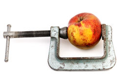 Apple in clamp Stock Photography