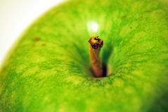 Apple Close Up On Top Stock Image