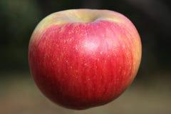 Apple Royalty Free Stock Image