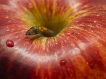 Apple Closeup Stock Photos