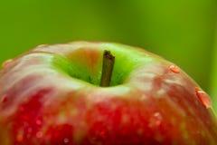 Apple closeup Arkivfoton