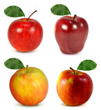 Apple collection royalty free stock photography