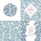 Apple conçoivent la collection de calibre Bannières, modèle, composition Illustration de vecteur illustration de vecteur