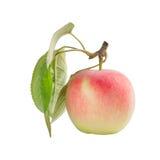 Apple con i fogli Fotografie Stock Libere da Diritti